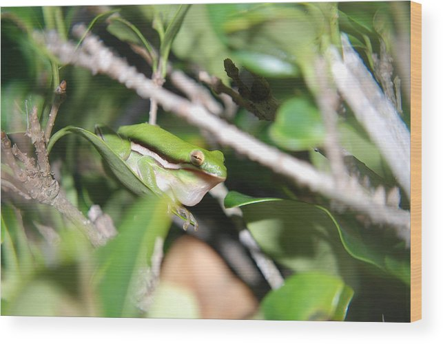 Florida Wood Print featuring the photograph Florida Croacker by Margaret Fortunato