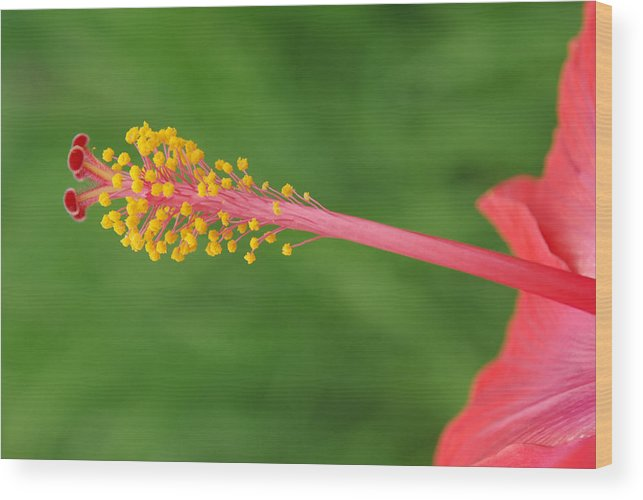 Nature Wood Print featuring the photograph Flower 5 by Eric Workman