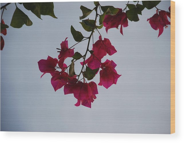 Flowers Wood Print featuring the photograph Flowers In The Sky by Rob Hans