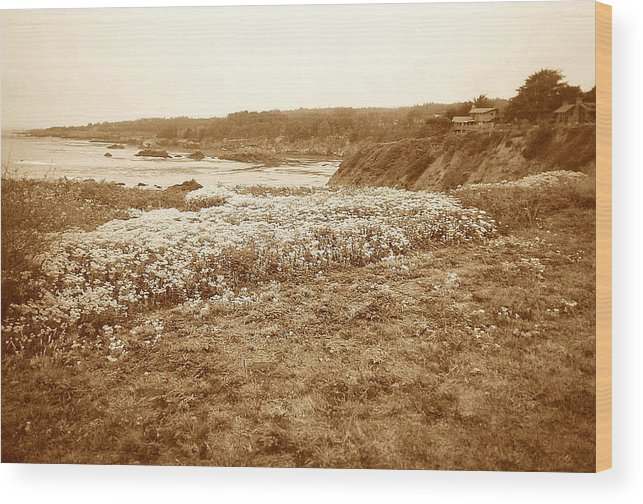 Seascape Wood Print featuring the photograph Flowers On The Bluff by Maggie Cruser