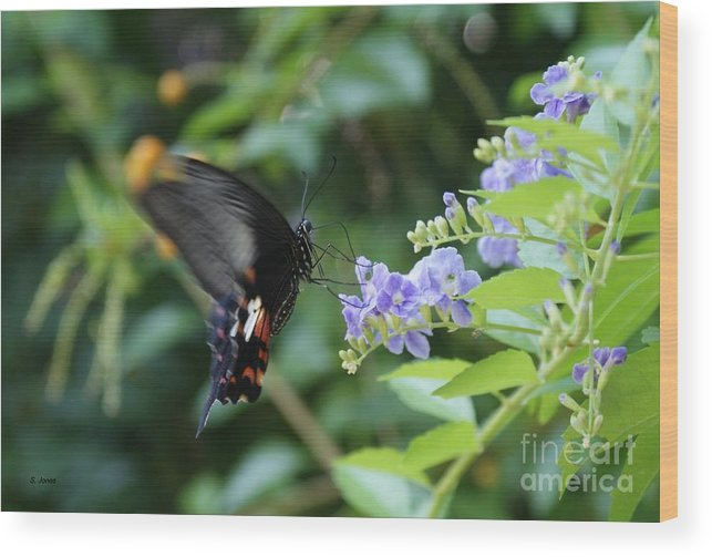 Butterfly Wood Print featuring the photograph Fly In Butterfly by Shelley Jones