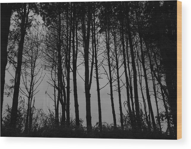 Forest Wood Print featuring the photograph Forest by Stefan Breton