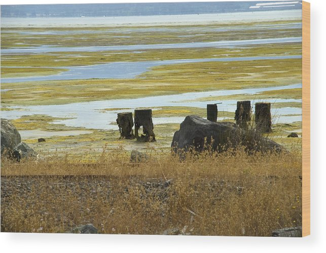 Swamp Wood Print featuring the photograph Forgotten Pier by Jessica Wakefield