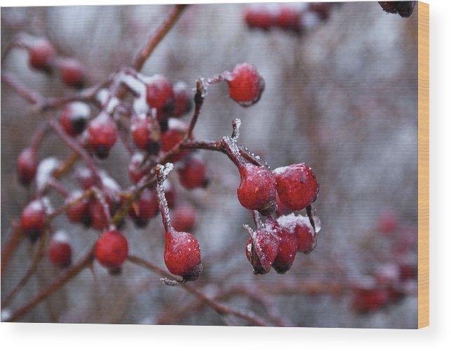 Frozen Wood Print featuring the photograph Frozen Fruit by Douglas Barnett