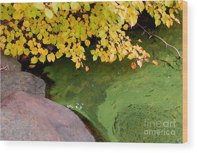 Lake Waramaug Wood Print featuring the photograph Green Slime by Andrea Simon