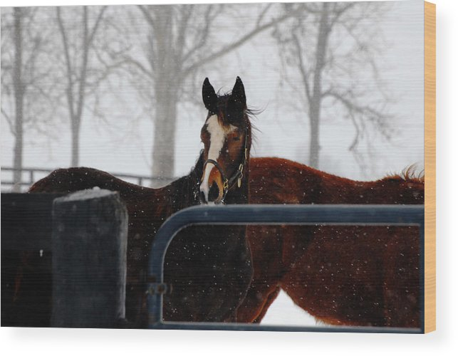 Snow Wood Print featuring the photograph Horse In A Snowstorm by Steven Crown