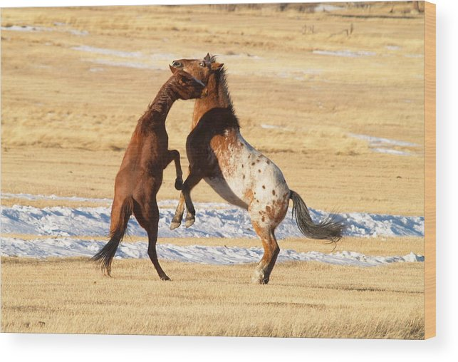 Horses Wood Print featuring the photograph Horseplay by Lauren Munger