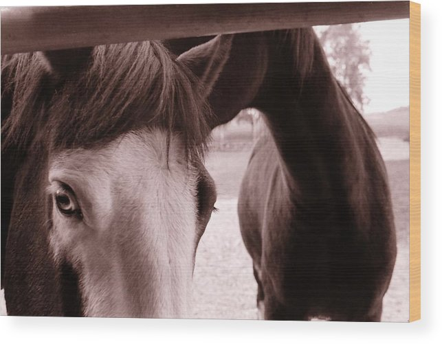 Horses Wood Print featuring the photograph Horses by Katherine Huck Fernie Howard