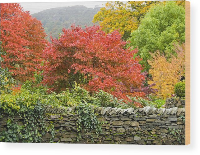 Leaves Wood Print featuring the photograph Incredible Fall Colors by Charles Ridgway