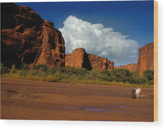 Horses Wood Print featuring the photograph Indian Ponies In The Canyon by Jerry McElroy