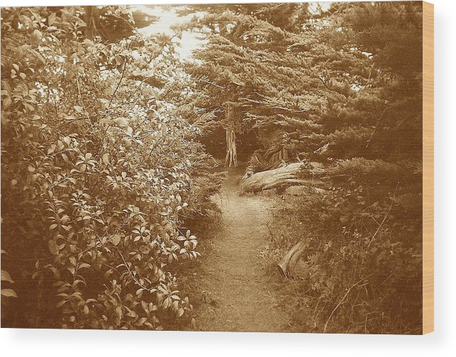 Woodscape Wood Print featuring the photograph Into The Woods Sepia by Maggie Cruser