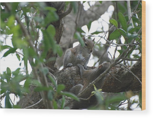 Squirrel Wood Print featuring the photograph Lending A Helping Hand by Rob Hans
