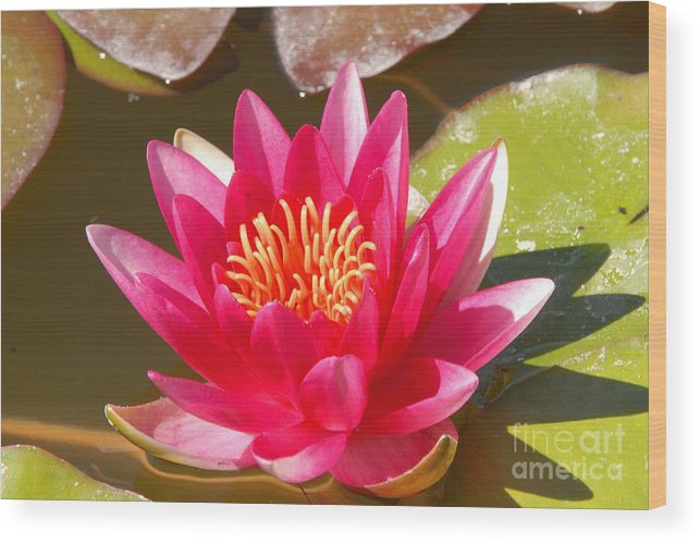 Flower Wood Print featuring the photograph Lilly Pad With Bloom by Dennis Hammer