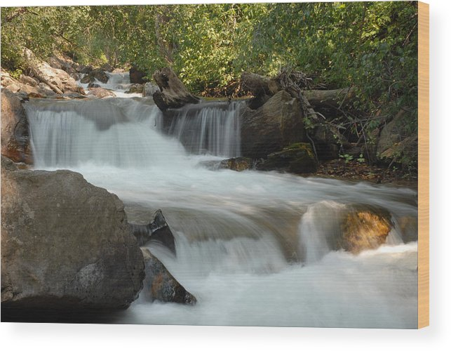Cascade Wood Print featuring the photograph Middle Provo River Cascade by Dennis Hammer