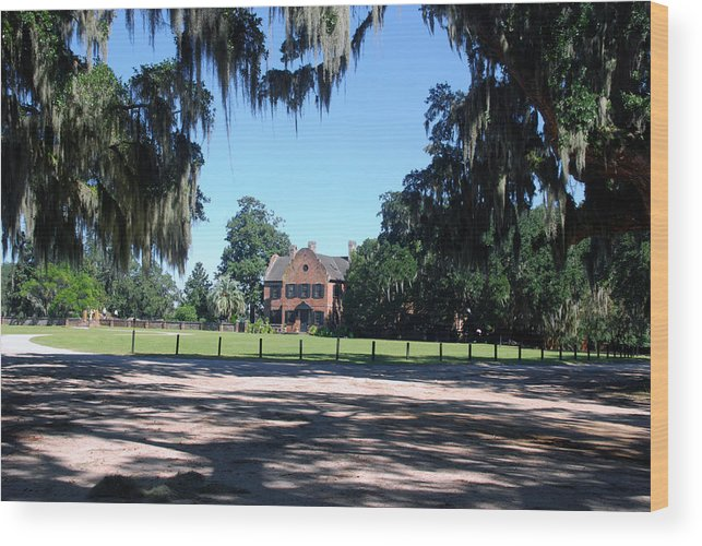 Photography Wood Print featuring the photograph Middleton Plantation Charleston Sc by Susanne Van Hulst