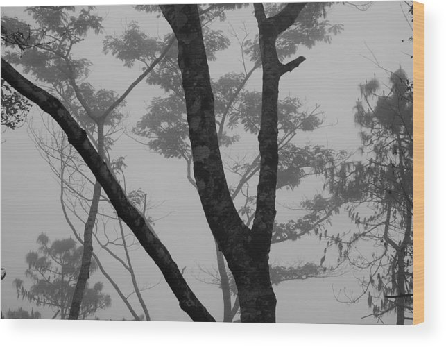 Forest Wood Print featuring the photograph Mist by Stefan Breton