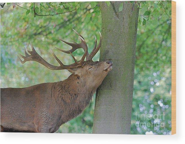 Doug Thwaites Wood Print featuring the photograph Mmmm by Doug Thwaites