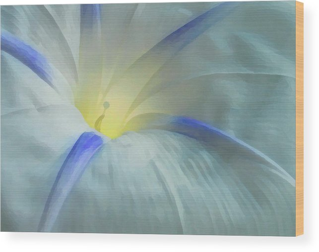 Morning Glory Wood Print featuring the photograph Morning Glory by Gene Sizemore