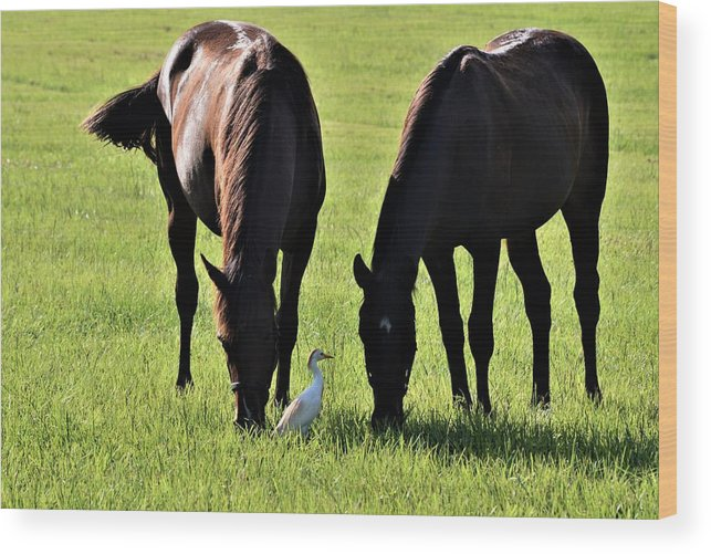 Morning Graze Wood Print featuring the photograph Morning Graze by Warren Thompson