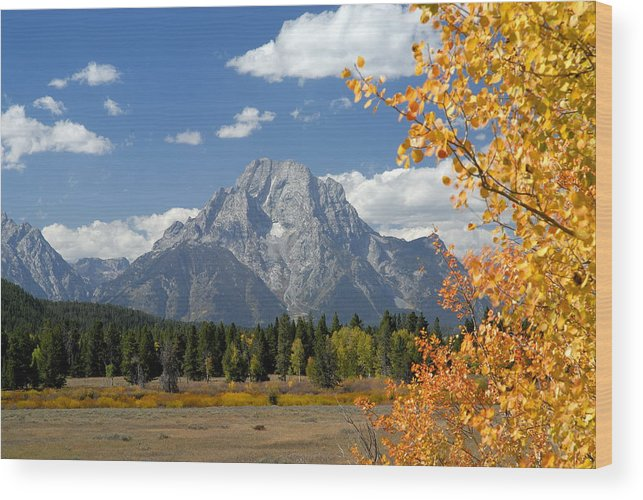 Grand Teton National Park Wood Print featuring the photograph Mount Moran In Autumn by Larry Ricker