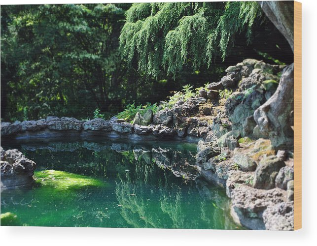 Nature Photography Wood Print featuring the photograph Natural Verde by Dion Baker