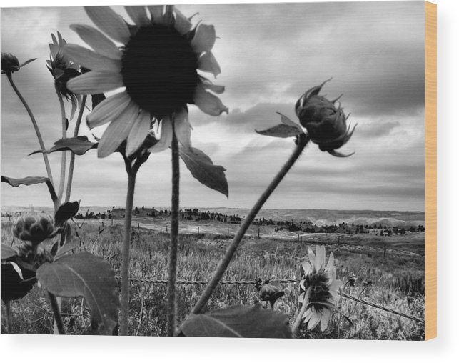 Black And White Wood Print featuring the photograph Nebraska Sky by Tingy Wende