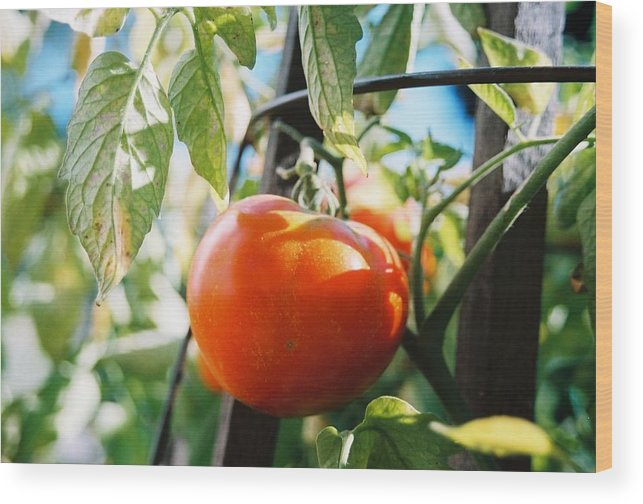 Tomato Wood Print featuring the photograph Never A Time More Opportune by Jennifer Trone