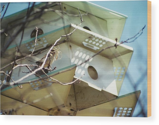 Bird House Wood Print featuring the photograph New Season by Jennifer Trone