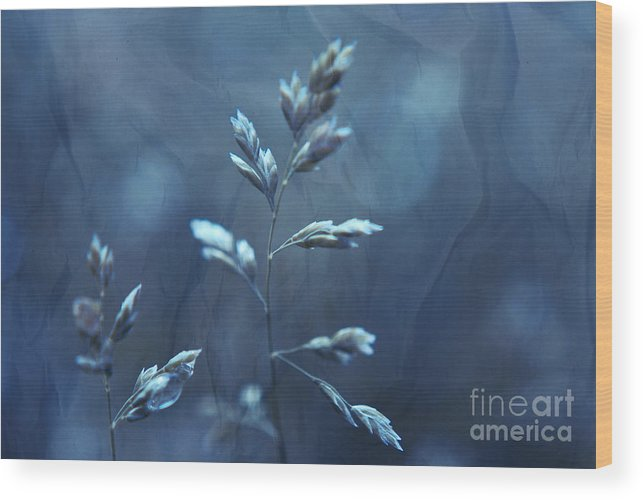 Blue Wood Print featuring the photograph Night Life by Aimelle