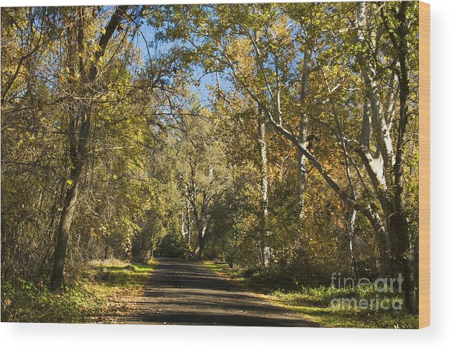 Landscape Wood Print featuring the photograph North Park Drive by Richard Verkuyl