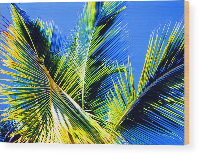 Palm Wood Print featuring the photograph Palm Leaves Against The Sky 3 Ae by Lyle Crump