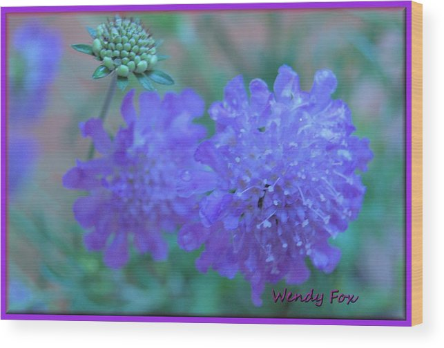 Butterfly Wood Print featuring the photograph Pin Cushion Flower by Wendy Fox