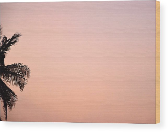 Palm Wood Print featuring the photograph Pink Skies by Corinne Rhode