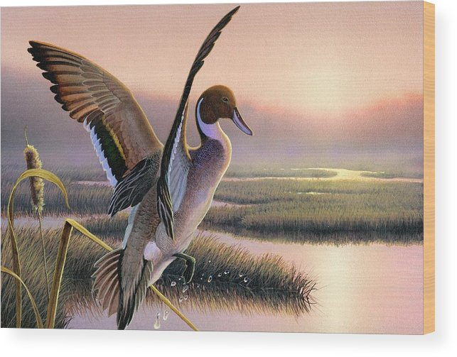 Pintail Duck Painting Original Wi Waterfowl Contest Marsh Hunting Stamp Sunrise Pink Bird Cattail Wood Print featuring the painting Pintail Duck-3rd Place Wi by Daniel Pierce