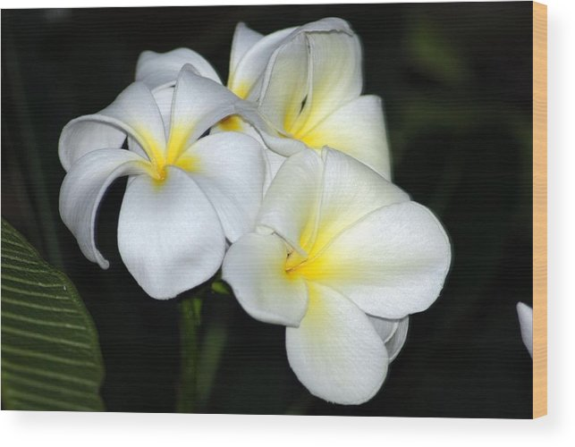 Wood Print featuring the photograph Plumeria by JK Photography