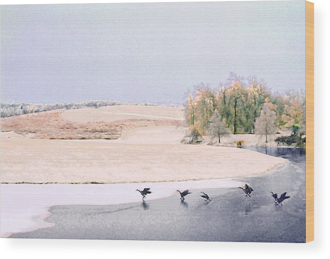 Landscape Wood Print featuring the photograph Powell Gardens In Winter by Steve Karol