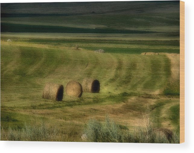 Hay Wood Print featuring the photograph Prairie Grace by Tingy Wende
