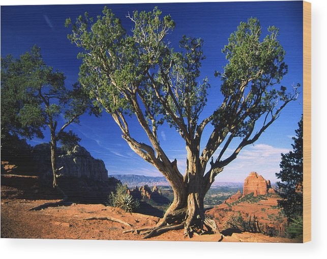 Arizona Wood Print featuring the photograph Primary Colors by Randy Oberg