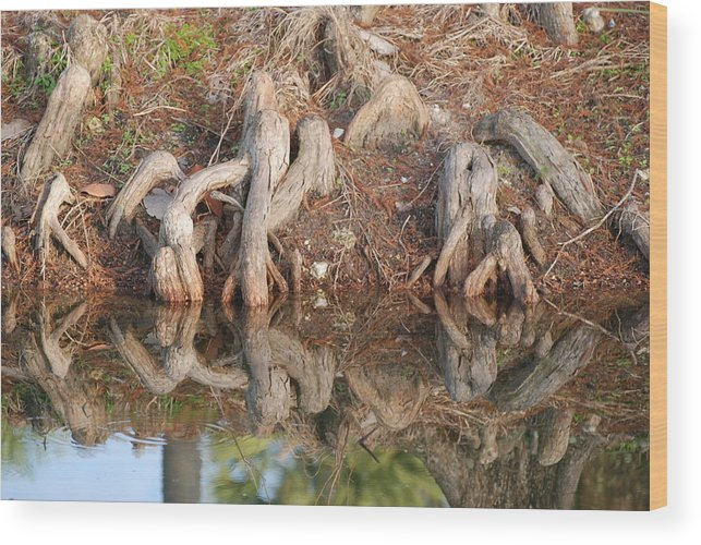 Roots Wood Print featuring the photograph Rooted Reflections by Rob Hans