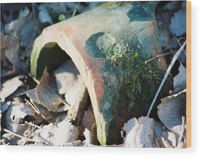 Moss Wood Print featuring the photograph Rotting Heart For You by Jennifer Trone