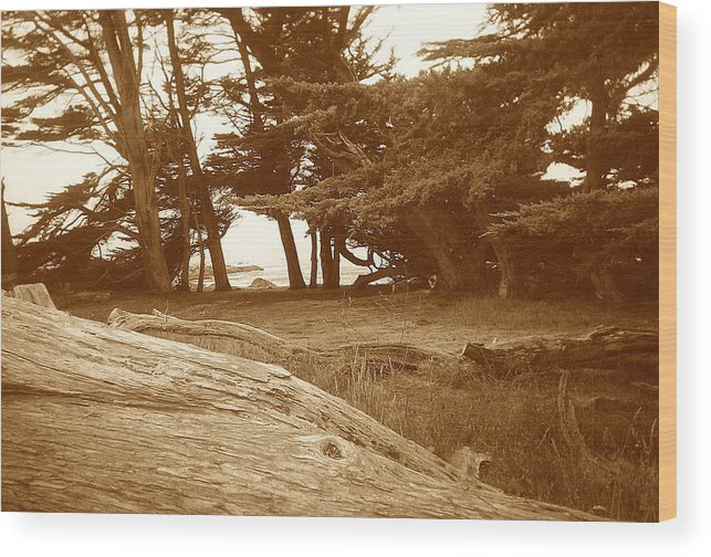 Seascape Wood Print featuring the photograph Sleepy Shore Sepia by Maggie Cruser