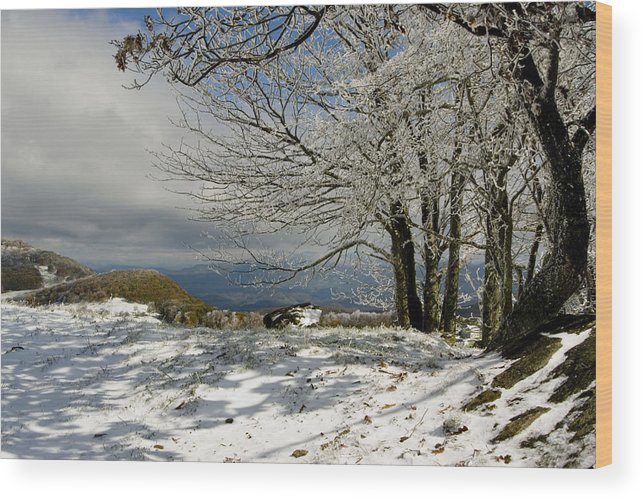 Snowy Scene Wood Print featuring the photograph Snow On Beech Mountain by Gregory Colvin