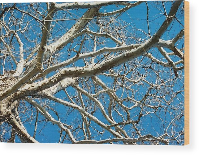 Tree Wood Print featuring the photograph Space Dream by Jennifer Trone