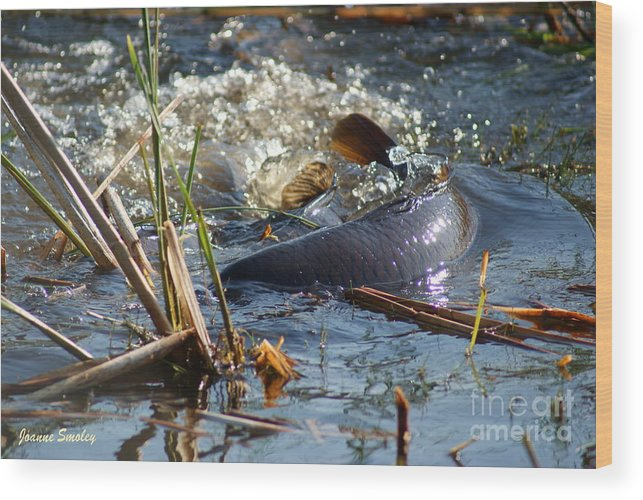 Carp Fish Spawning Wood Print featuring the photograph Spring Spawn by Joanne Smoley