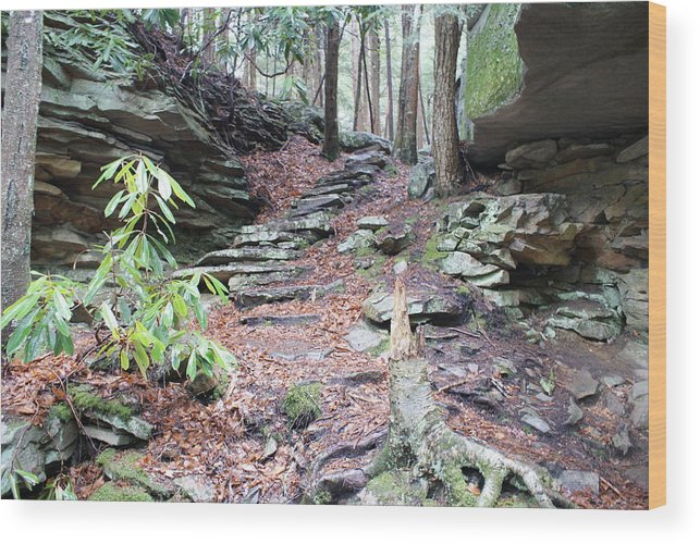 Nature Wood Print featuring the photograph Stone Path by Heather Green