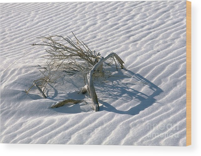 White Sands Wood Print featuring the photograph Struggle To Survive by Sandra Bronstein