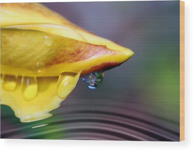 Allamanda Wood Print featuring the photograph Summer Pond by Lesley Smitheringale