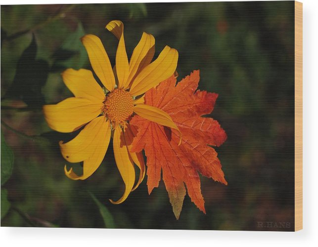 Pop Art Wood Print featuring the photograph Sun Flower And Leaf by Rob Hans