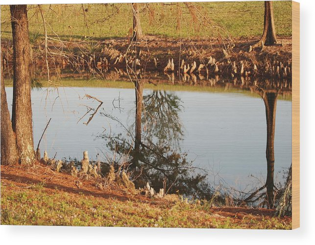 Water Wood Print featuring the photograph Sunny Pond by Rob Hans