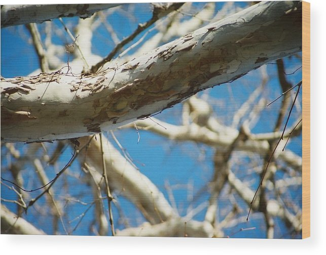 Tree Wood Print featuring the photograph Surreal Telephoto by Jennifer Trone